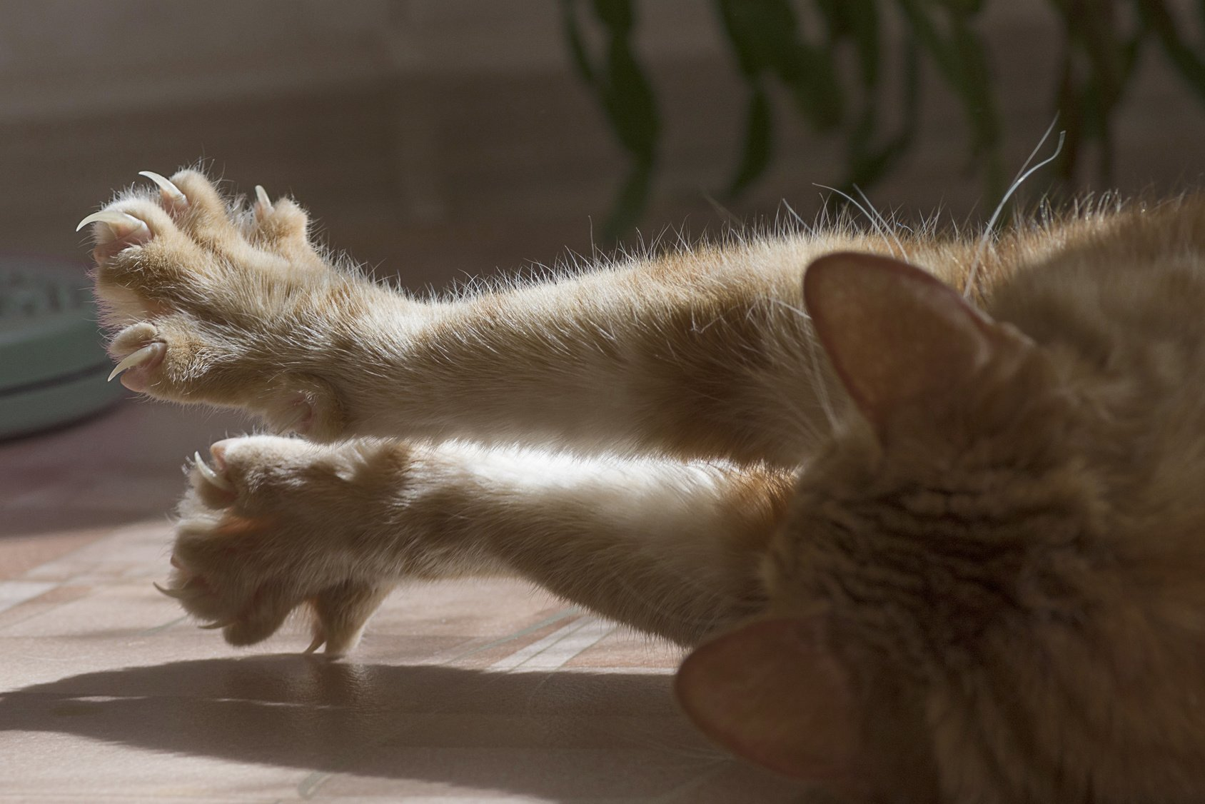 Declawing Cats: Why You Should Never Consider This An Option