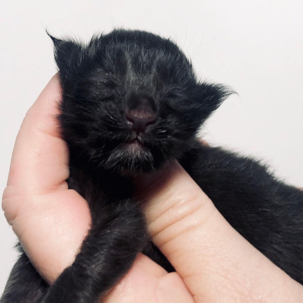 naming a kitten