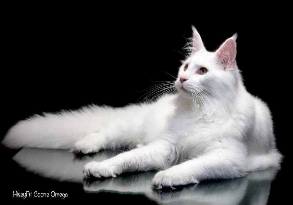 How to photograph white cat