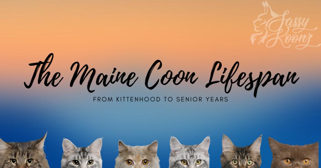 maine coon lifespan