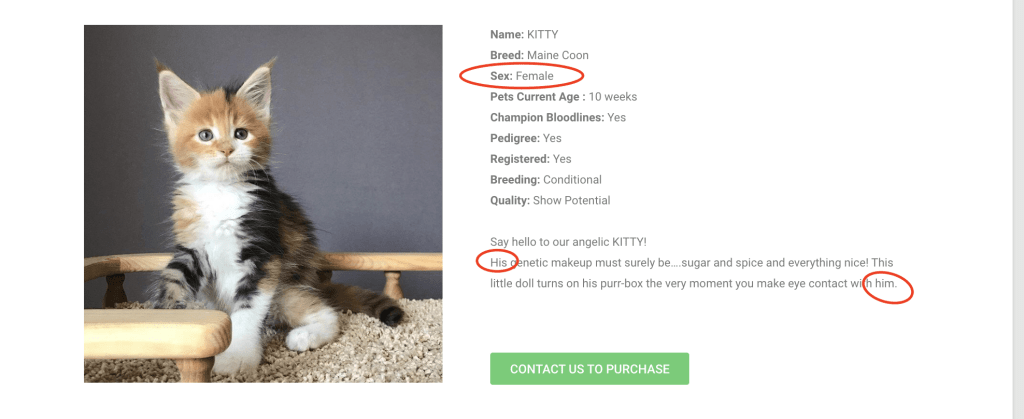 dont get scammed when buying a maine coon kitten