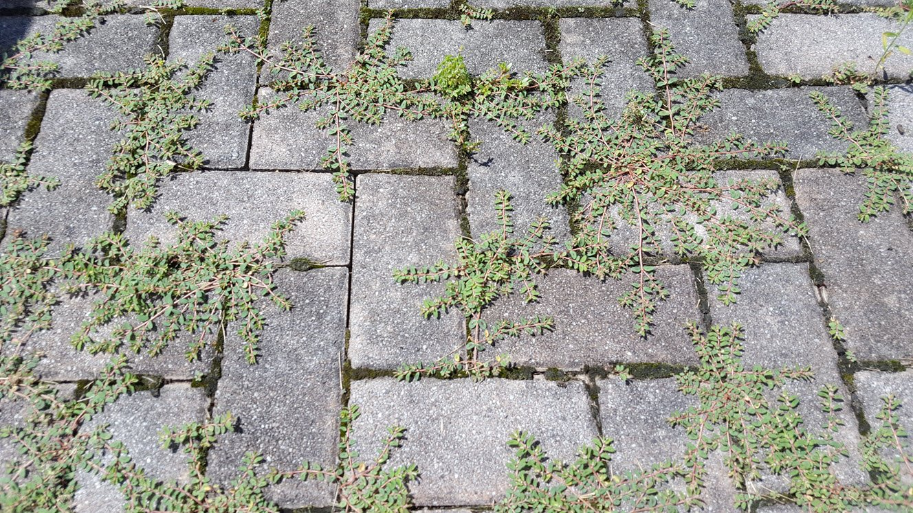 How To Get Rid Of Patio Weeds Without Chemicals