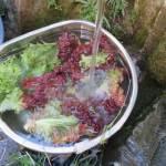 畑の収穫物は井戸で洗って綺麗にするまでがセットです