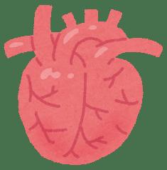 小さい心臓