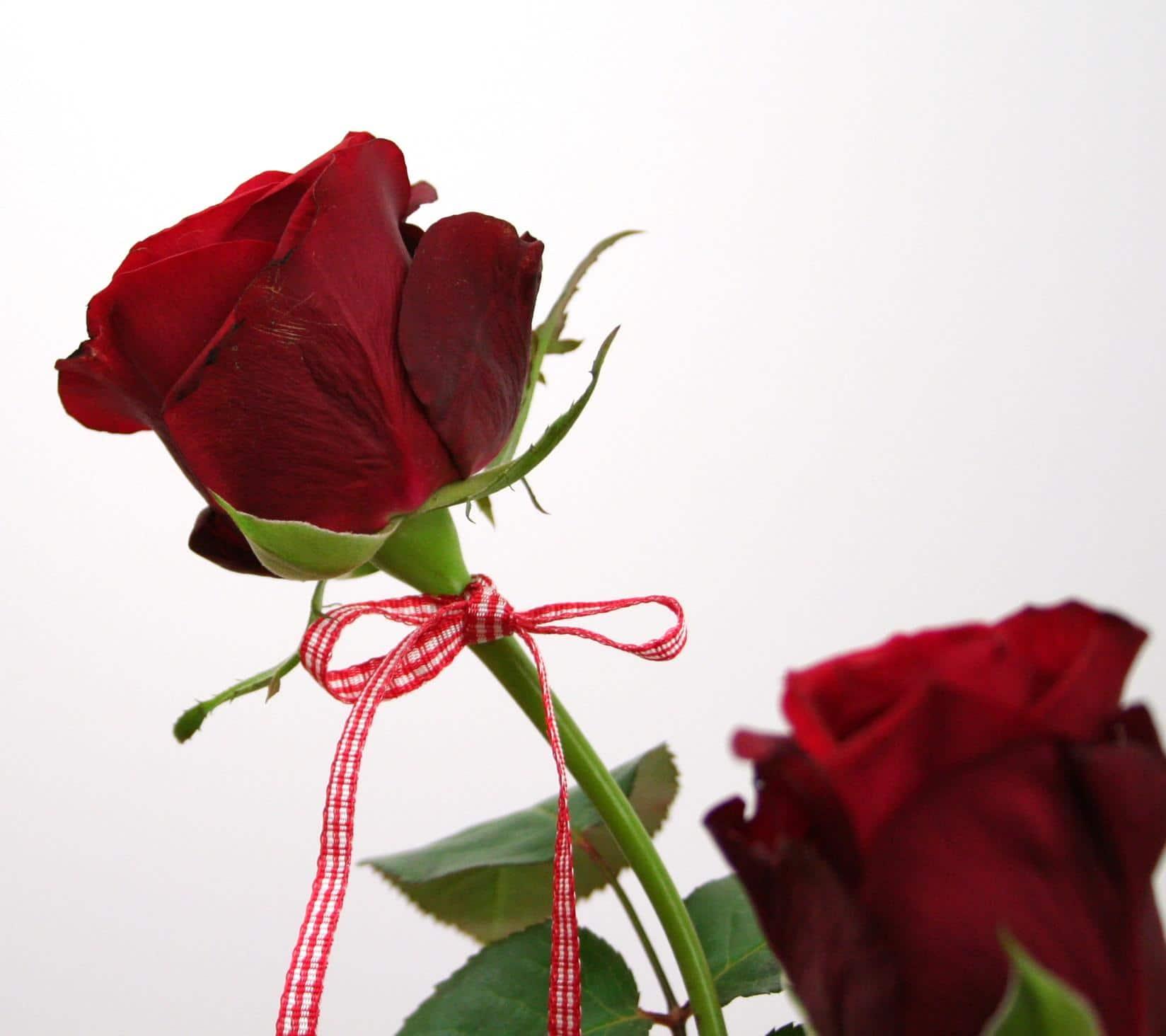 Rote Rose mit VichyKaro  Valentinstag  Satinband