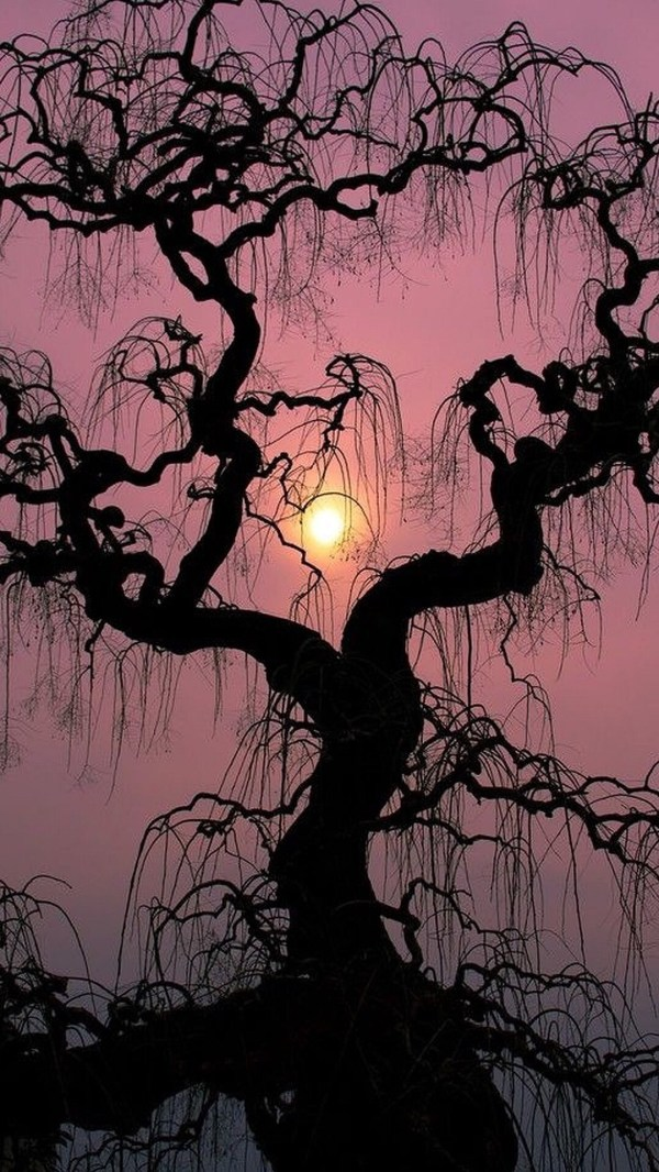 Spooky Tree and Moon