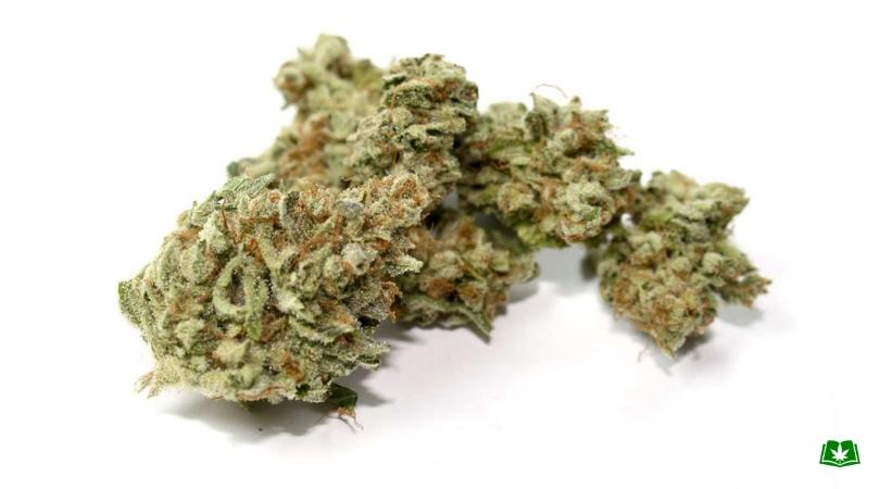 Florida Medical Marijuana - 9 Pound Hammer