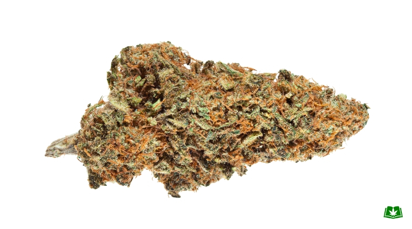 Florida Medical Marijuana - Harlequin