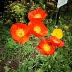 あしかがフラワーパークに咲く花