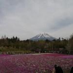 富士芝桜まつりへ行ってきました
