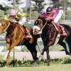 日本競馬最高の名勝負ベスト10を教えて下さい