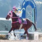 高知競馬、ついに何も無い日に5億円の大台を突破