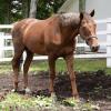 種牡馬としては成功したが、競争馬としては強いとはどうしても思えない馬といえば
