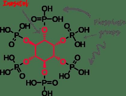 Phytic acid + labels