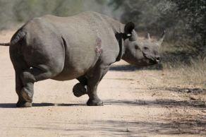 rhino Photo by Richard de Wit.