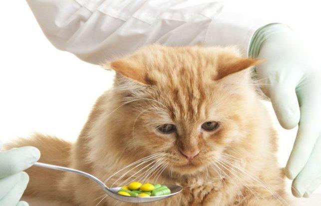 Cara menghilangkan jamur pada kucing - Memberi makan obat dalam
