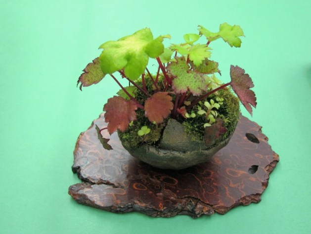 Companion plant