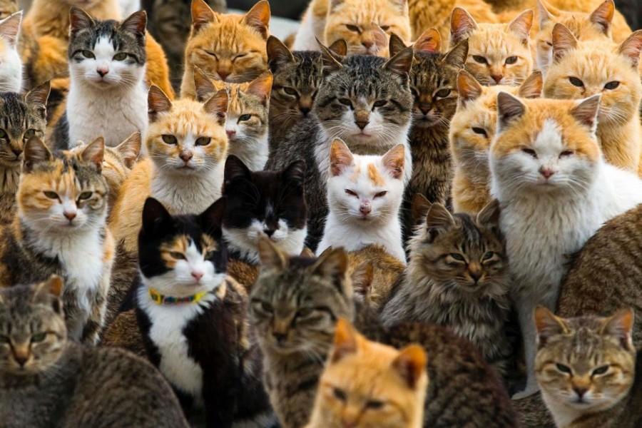 Gambar Ratusan Kucing