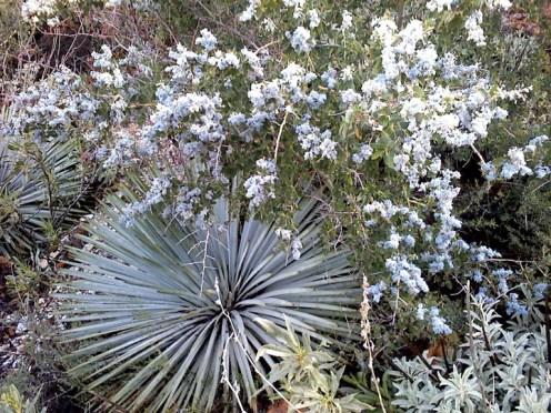 Flowers at Barrett-Stoddard