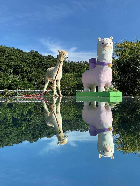 特設的天空之鏡,旁邊仲有羊駝公仔坐鎮,等大家齊齊打卡咁靚的環境!(圖片來源:FB@蝶豆花園 Butterfly Valley)