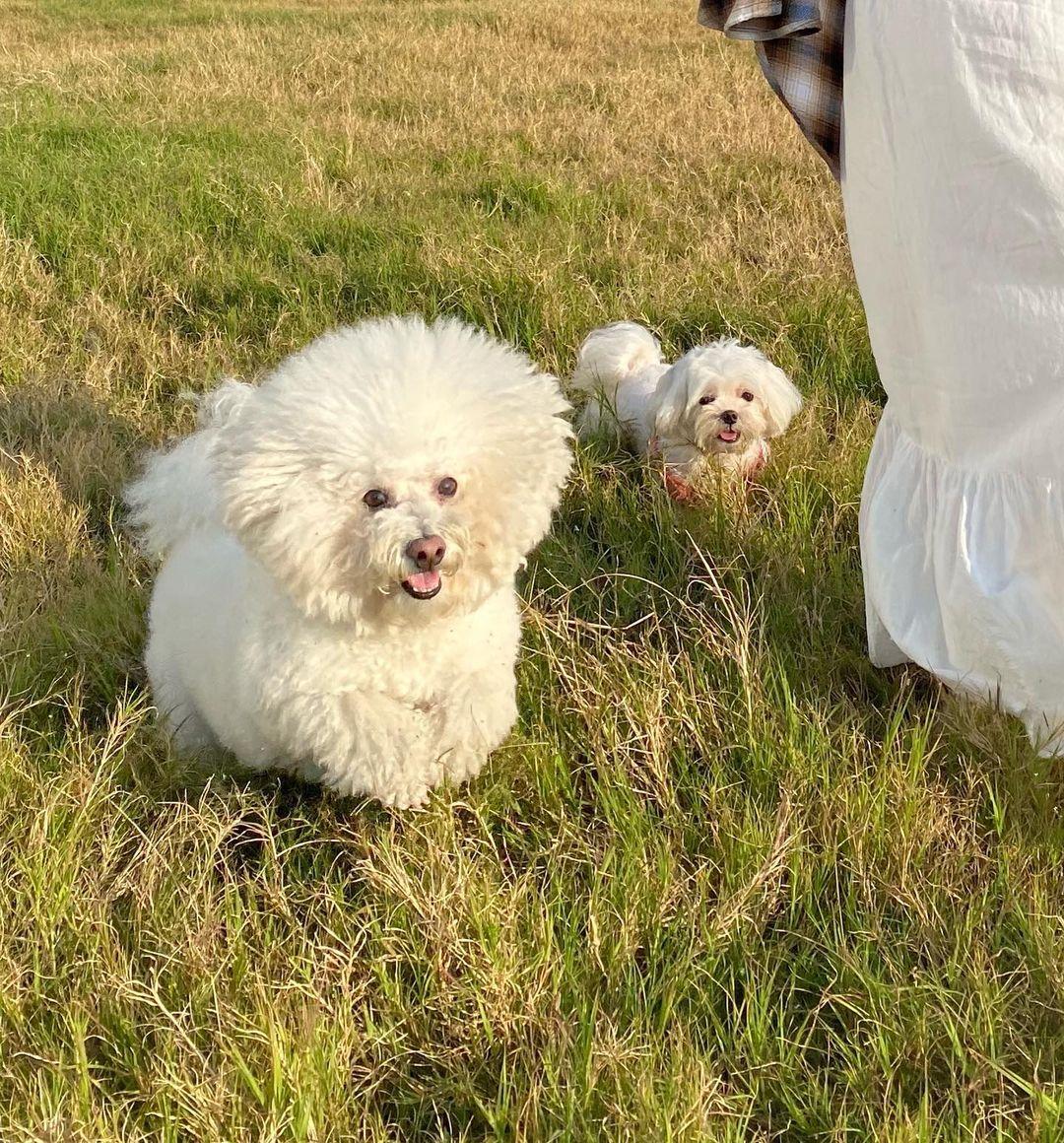 講起陽光與海,唔少主人都想帶寵物一齊放放電,旁邊的草坪就最適合佢地跑黎跑去、呼吸下新鮮空氣啦~(圖片來源:IG@giyaaa_z)