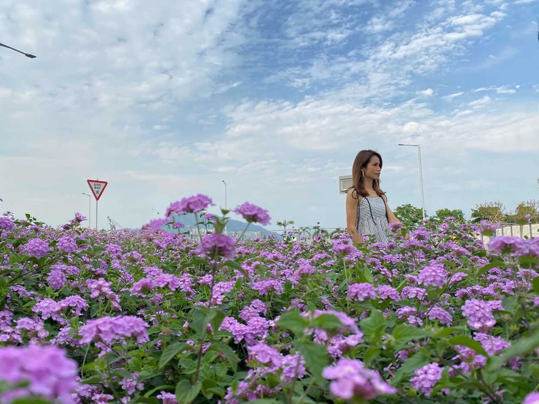 大熱打卡位 屯赤隧道 / 屯門浩和街,近隧道口的花圃上有一大片紫色馬纓丹花田(圖片授權轉載:IG@pinkywu20)