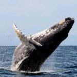 Walvissen spotten op Madeira