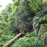 Azoren: São Miguel
