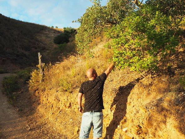Planten en Kruiden Algarve