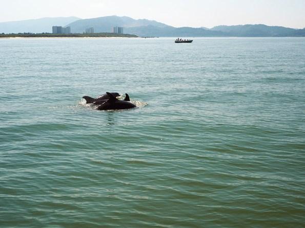 Dolfijnen Sado | Saudades de Portugal