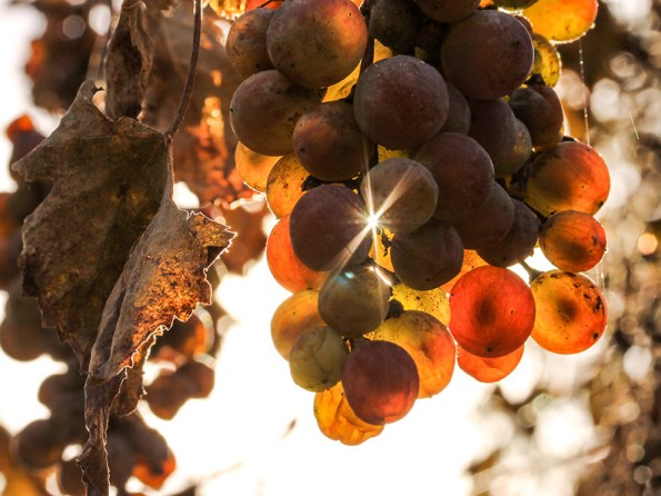 Wijn uit Portugal | Saudades de Portugal