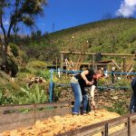 Agro-Toerisme: Natuurlijk Bouwen