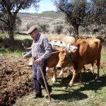 Agro-Toerisme: Ouderwetse Gewoontes