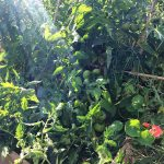 Agro-Toerisme: Genieten uit Eigen Tuin