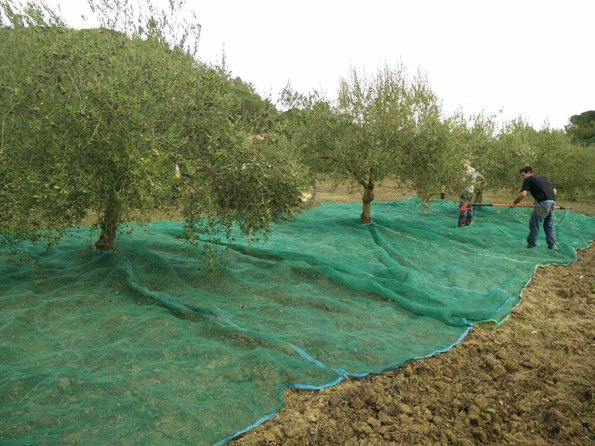Passeite: oogstmaand | Saudades de Portugal