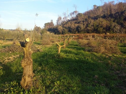 Passeite: Nieuw Seizoen | Saudades de Portugal