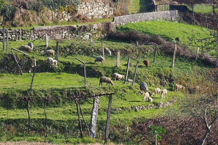 Paredes de Coura: het Toscane van Portugal