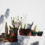 Algarve Natureza – Cal e Cortiça