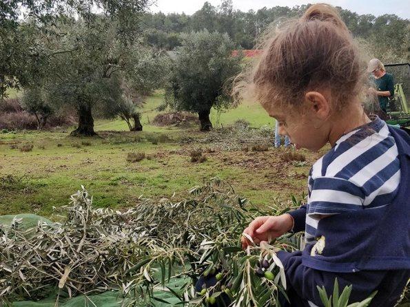 Hello Casa Oliveira: Wat een Jaar