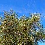 Agro-Toerisme: Najaar