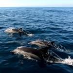 Celebra a Vida: Dolfijnen Spotten