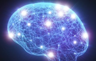 cérebro estudo