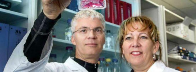 Transplantação com células estaminais melhora prognóstico em doentes oncológicos de alto risco