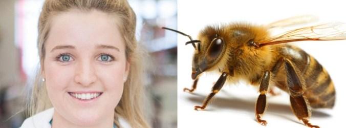 Veneno de abelhas promissor contra cancro da mama