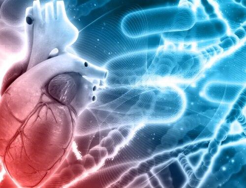 Estudo confirma capacidade de regeneração de células cardíacas após o nascimento
