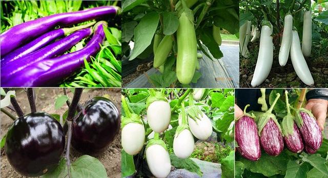 300-unidades-pacote-Mix-6-tipos-de-sementes-de-berinjela-sementes-de-berinjela-em-casa-de.jpg_640x640.jpg
