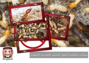 شركات مكافحة النمل الأبيض بالمدينة المنورة