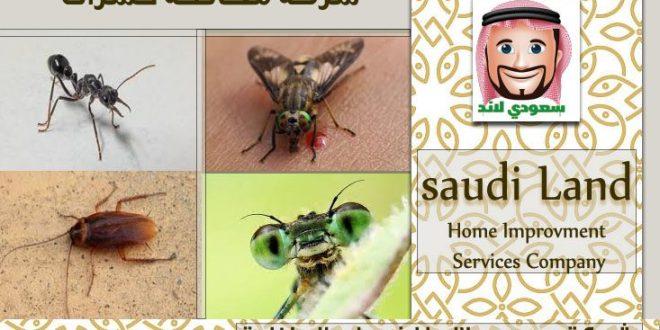 شركة مكافحة الحشرات داخل جدة