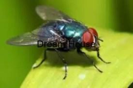 اسماء الحشرات الطائرة والغير طائرة معلومات هامة.. تعرف عليها