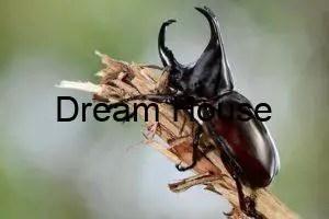 معلومات عن الحشرات